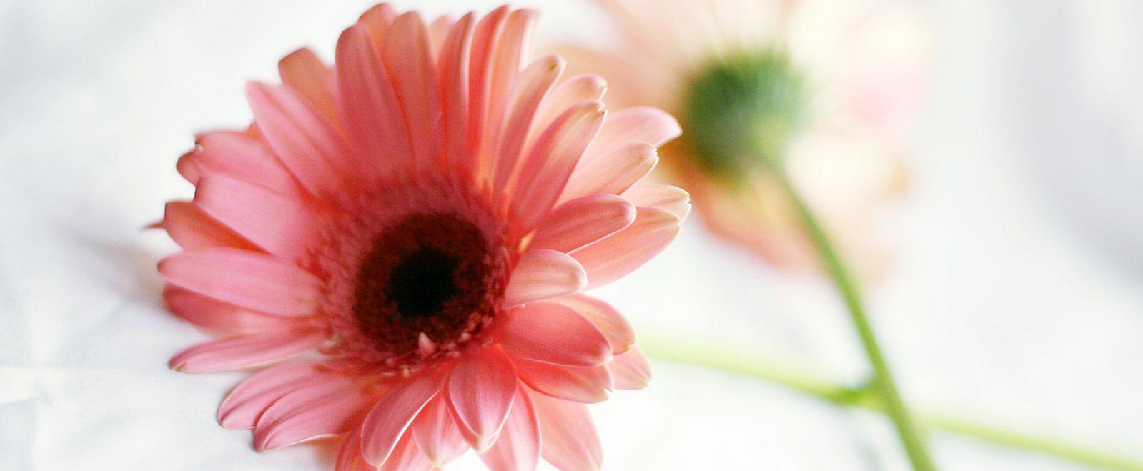 lucky-flower